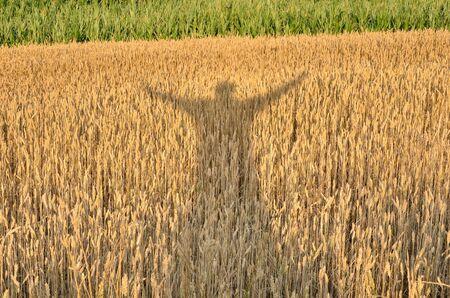 シルエットは、作物を楽しんでします。粒界で発生した彼の手を持つ男の影。