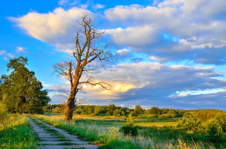 Beautiful summer landscape. Road and lonely tree with colored sky in the background. Stock Photo