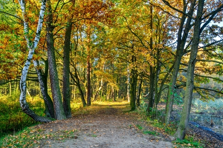 Beautiful autumn landscape. Path among colorful trees in the forest.