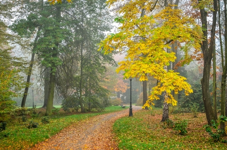 Beautiful autumn landscape. Walkway with autumn colored leaves in the park.