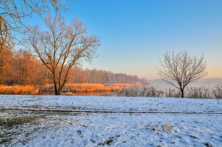 Winter morning landscape. Plants and trees by the lake. Stock Photo