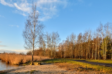 Beautiful morning landscape. Bushes and trees by the lake. Stock Photo