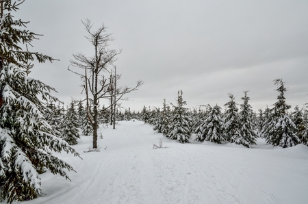 Fabulous winter landscape. Beautifully snow-covered trail in the Polish mountains.
