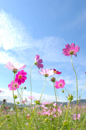 domain: Beautiful Cosmos with blue sky