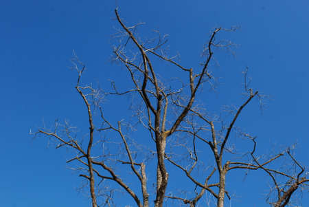 bared: winter bared branch and blue sky