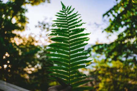 Green leaf on blue sky background. Leaf pattern. Фото со стока