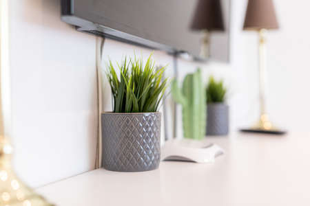 green plant in mug on the table Фото со стока