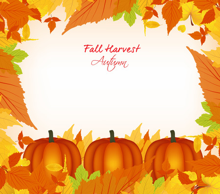 fall background: fall harvest background