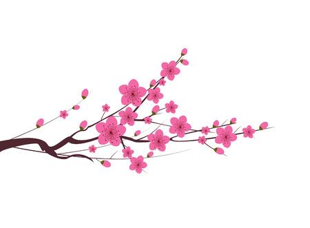 Fiore di prugna giapponese