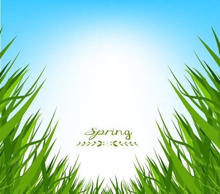 horizon over land: spring fresh grass background