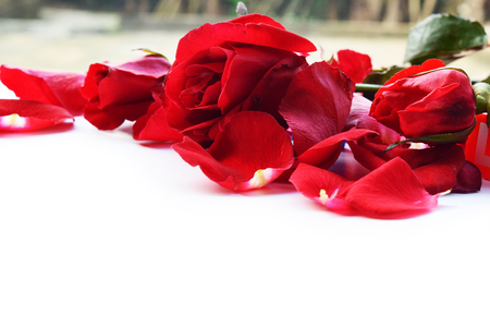 red roses for Valentine photo
