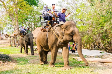buon: Man rides elephant on path at countryside, mahout ride this animal for travel, Viet Nam
