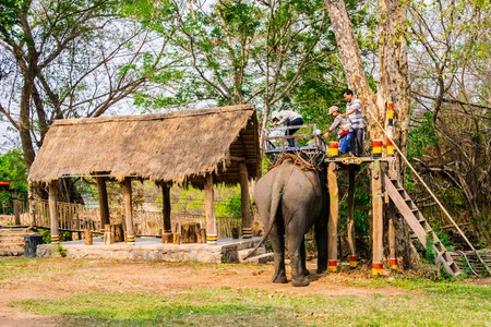 mahout: Man rides elephant on path at countryside mahout ride this animal for travel Viet Nam