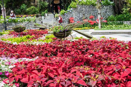 ba: Flower garden at Ba Na Hills Da Nang Vietnam