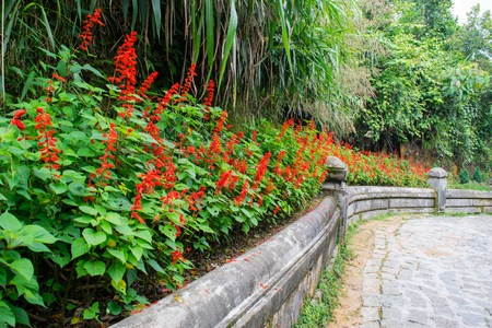 na: Flower garden at Ba Na Hills, Da Nang, Vietnam