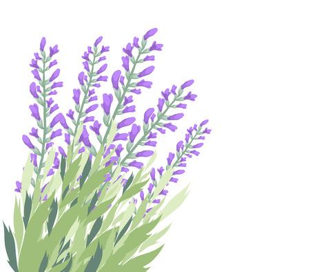 eywords background: Watercolour lavender flower card Illustration
