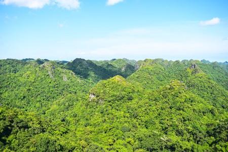 deciduous woodland: Cat Ba National Park