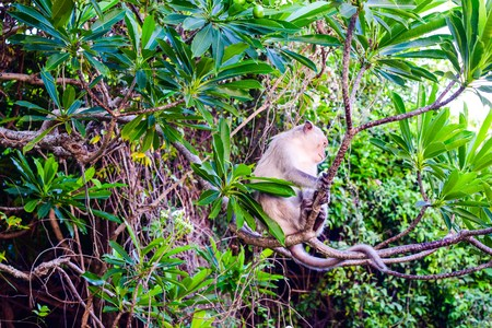 Monkey island at Cat Ba, Ha Long Bay in Vietnam silhouette photo