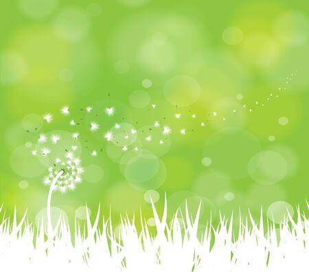 voorjaar achtergrond met witte paardebloemen