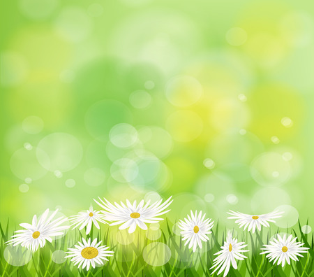 white daisy: Summer meadow background with white daisy flowers