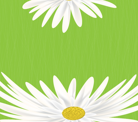 summer meadow: Summer meadow background with white daisy flowers