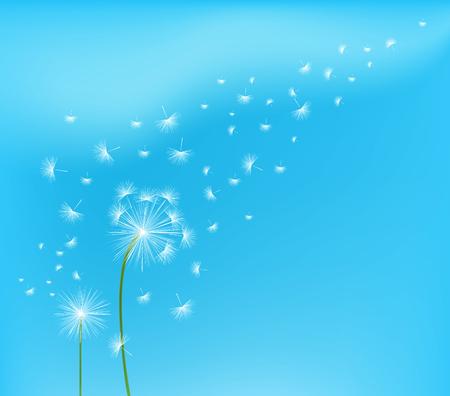 field and sky: Dandelion flower field over blue sky Illustration