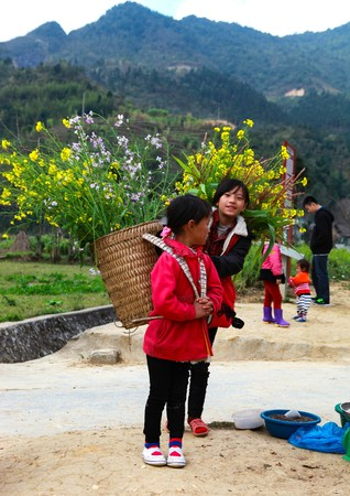 DONG VAN, HA GIANG, VIETNAM, January 01, 2017: Unidentified ethnic minority kids with baskets of rapeseed flower in Hagiang, Vietnam. Hagiang is a northernmost province in Vietnam Editorial
