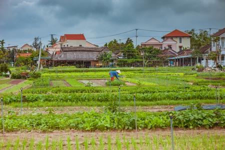 HOI AN, VIETNAM - MARCH 17, 2017: Tra Que village, organic vegetable field, near Hoi An old town, Vietnam Sajtókép