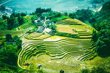 Rice field terraces at Sapa Vietnam Stock Photo