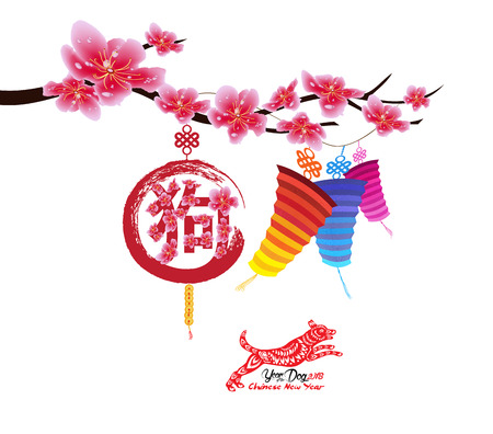 Sakura flowers background. Cherry blossom and lantern isolated white background. Chinese new year
