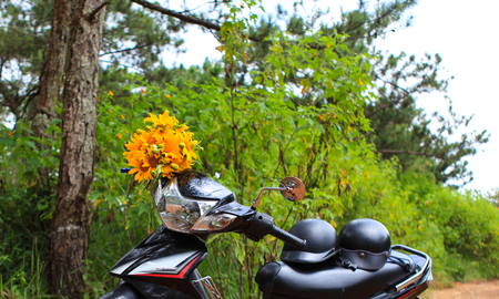 motobike: DALAT, 26 October 2017: Road trip ride a motorbike at path of countryside, bush of wild sunflower bloom in yellow, colorful scene in Da Lat, Vietnam
