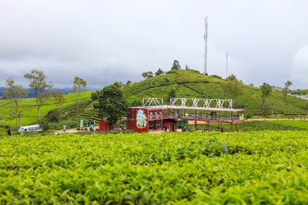 DALAT, 26 October 2017: Field of green tea hill. Cau Dat green tea hill