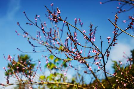 Tiempo de primavera en Sapa, Lao Cai, Vietnam Foto de archivo