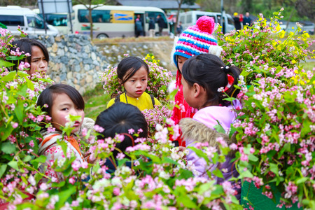 DONG VAN, HA GIANG, VIETNAM, December 18th, 2017: Unidentified ethnic minority kids with baskets of rapeseed flower in Hagiang, Vietnam. Hagiang is a northernmost province in Vietnam Editorial