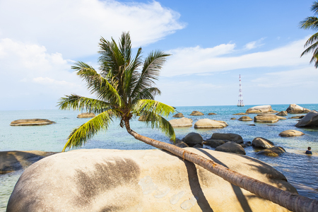 Coconut tree at coconut beach on Son island, Kien Giang, Vietnam. Near Phu Quoc island Banque d'images