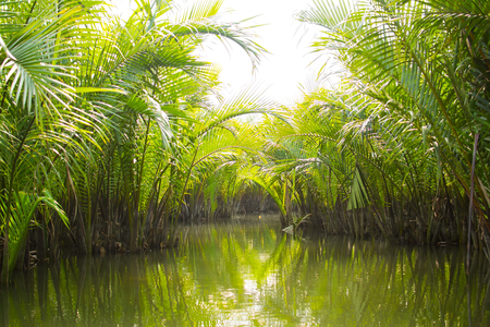 Tourists visit water coconut forest in Hoi An