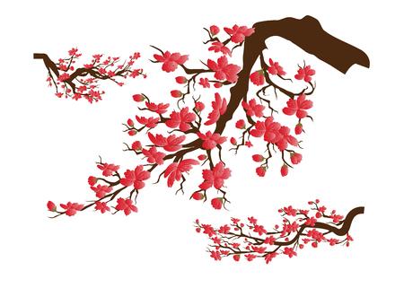 Chinese new year. Sakura flowers background. cherry blossom isolated white background Illustration