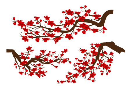 Branches of red blossoming sakura . Japanese cherry tree isolated white background. Chinese new year