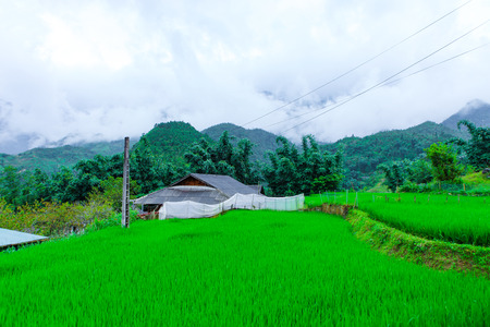 Beautiful scenery of the rice fields of Cat cat Village.