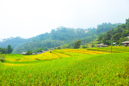 Rice fields on terraced. Fields are prepared for planting rice. Ban Phung, Huyen Hoang Su Phi, Ha Giang Province. Northern Vietnam