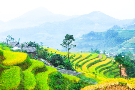 Rice fields on terraced. Fields are prepared for planting rice. Ban Luoc, Huyen Hoang Su Phi, Ha Giang Province. Northern Vietnam