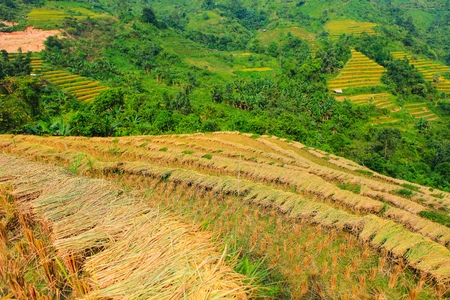 Rice fields on terraced. Fields are prepared for planting rice. Hoang Su Phi, Ha Giang Province. Northern Vietnam Stock Photo