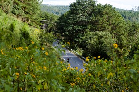 DA LAT, VIETNAM, November 8th, 2018: Vietnamese countryside with wild sunflower bloom in yellow along street, Dalat is city for travel, with beauty landscape, beauty village, wild flower