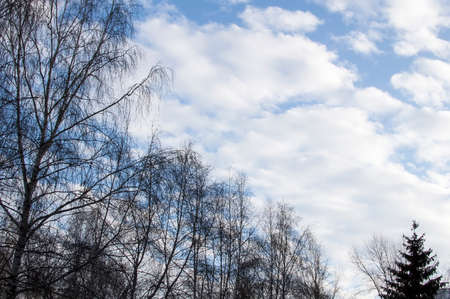 winter thaw: The sky, easy clouds, winter time, trees without leaves