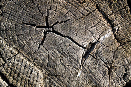 cross cut: The natural old tree, with a cross cut
