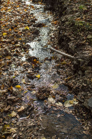 murmur: Forest stream and the fallen-down autumn leaves
