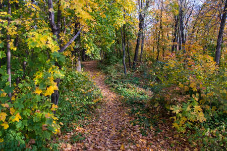 trampled: Foot footpath on the bright autumn wood Stock Photo