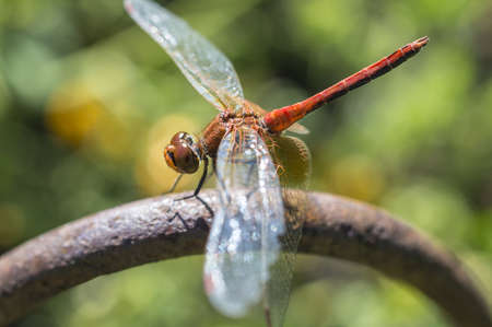 membranes: The dragonfly the vacationer on a bar