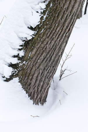 The tree trunk after a heavy snowfall in the winter