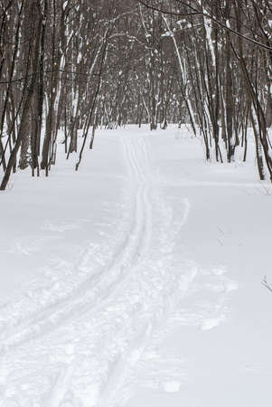 The ski track on fresh snow in the suburban park
